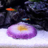 ARTIFICIAL ROUND RESIN CORAL