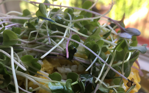 3 Ways to Eat Microgreens this Spring