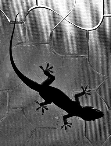 gecko in the shower