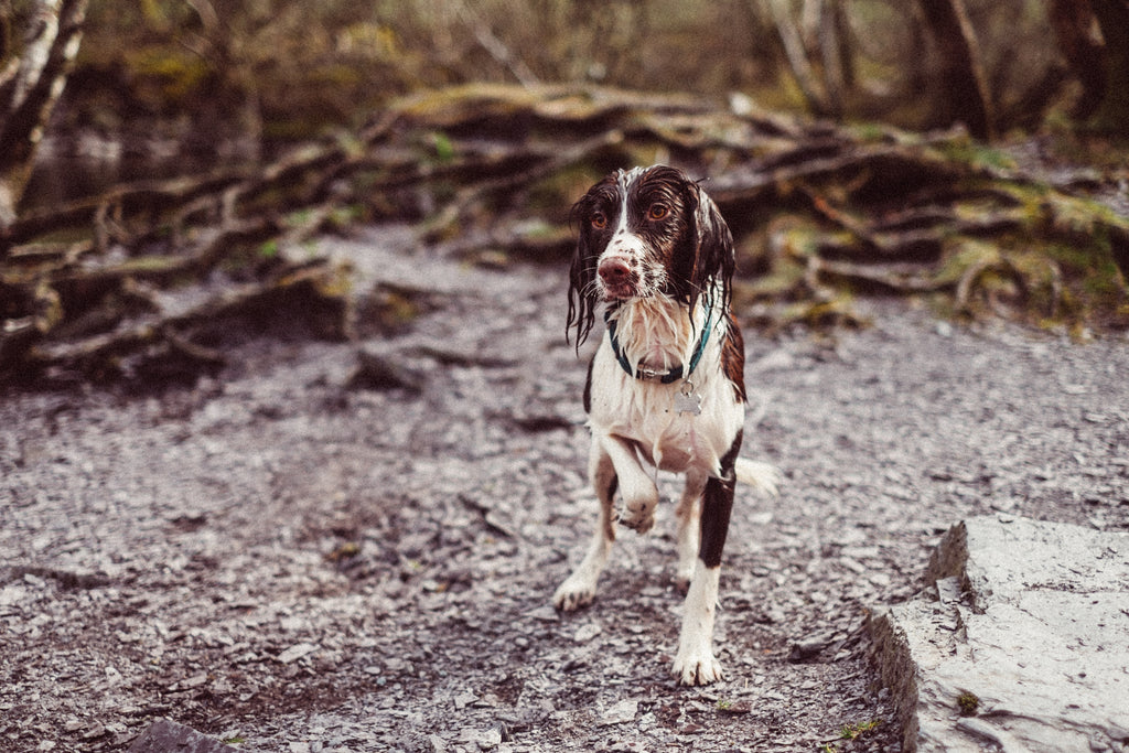Disaster Planning: Don't forget about your Dog