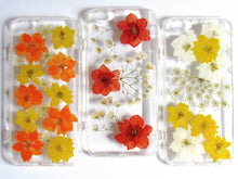 Load image into Gallery viewer, Clementines Real Flower Case (iPhone 6/6s)