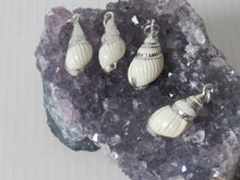 Load image into Gallery viewer, Tiny Conch Shell Necklaces