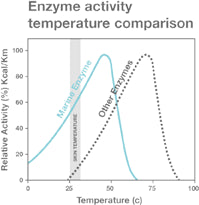 Enzyme activity temperature comparison
