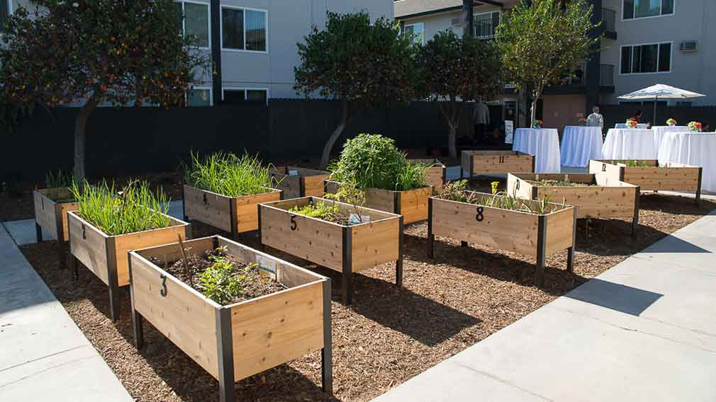 Jamboree's Miracle Terrace's community garden in Anaheim, CA