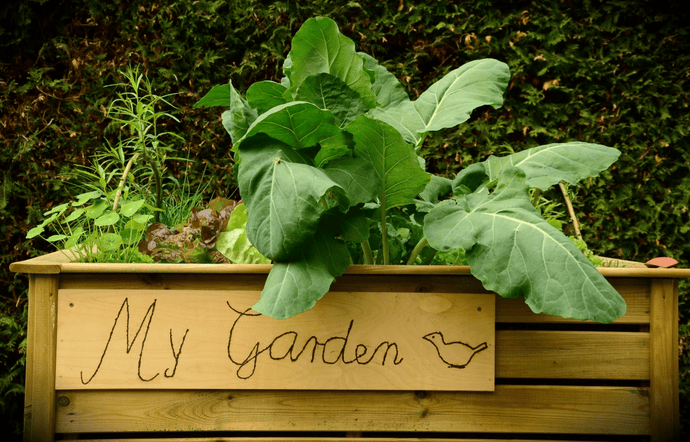 Indulge in a little kitchen gardening this year