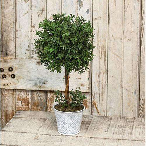 "New England Boxwood Topiary, 14.75"" Everyday CWI+"