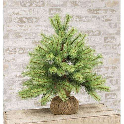 "Park Pine Little Giant Tree, 21"" General CWI+"
