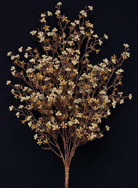 Star Flower Berry Bush - Earthtone Everyday CWI+