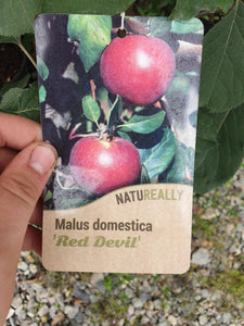Trees - Apple Red Devil (Malus domestica)