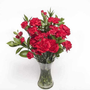 <p>A tasteful blend of over two dozon stems of Standard and Baby Carnations in red expertly hand-tied with tropical Greenery.</p><p>This beautifully simple arrangement is guaranteed to last and is sure to impress! </p>