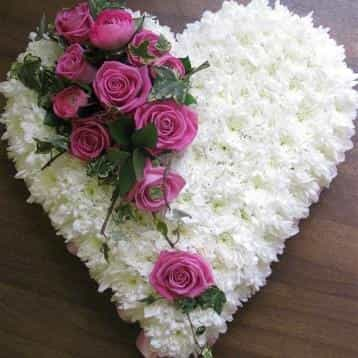 <p>A tribute to a love gone but not forgotten.</p><p>This beautiful heart shaped arrangement is finished here in a mass of white chrysanthemums with roses for effect. </p><p>Measuring approximately 35cm across this arrangement is ideal for the loss of loved one and can be finished in a range of colours and styles, simply contact us to personalise.</p>