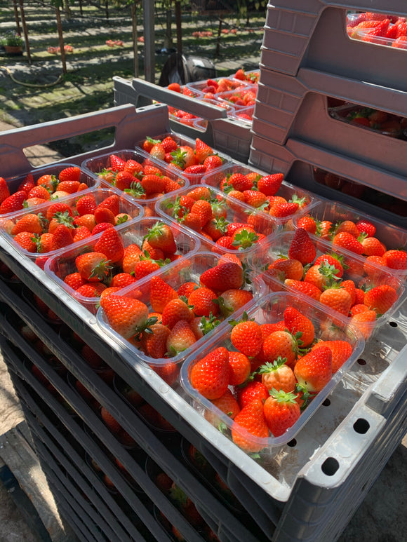 Strawberries Box of 12 x 450g