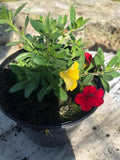 "Bedding - Petunia ""Million Bells Yellow & Red"""