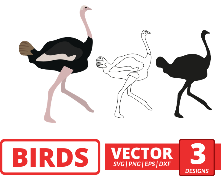 Ostrich SVG vector bundle - Svg Ocean