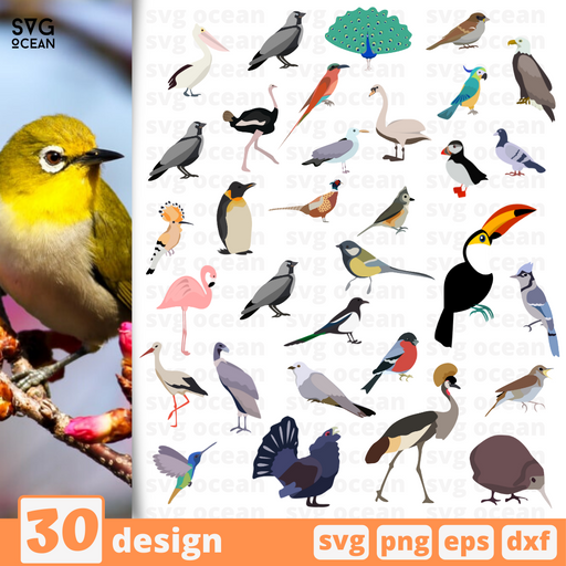 Birds SVG vector bundle - Svg Ocean