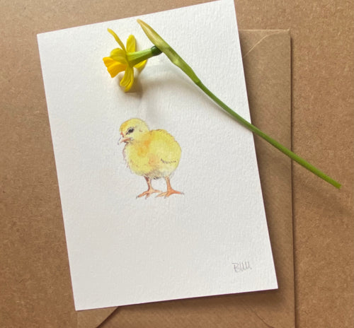 Greetings Card - Chick