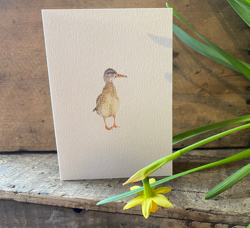 Greeting Card - Duck