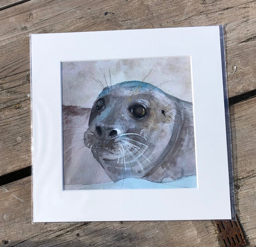 Giclee Prints - 23cm x 23cm  - Grey Seal
