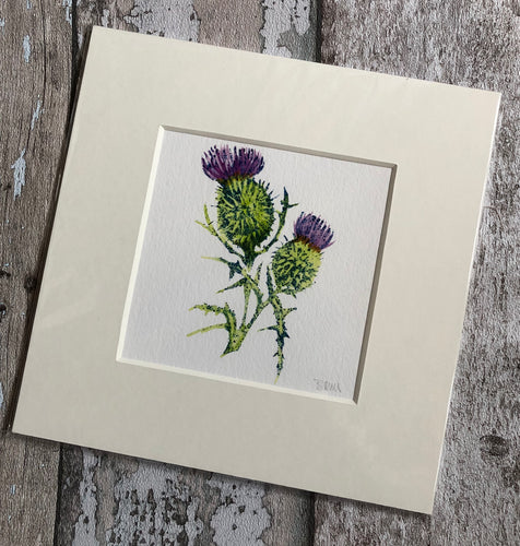 Giclee print 23 x 23cm - Scottish Thistle