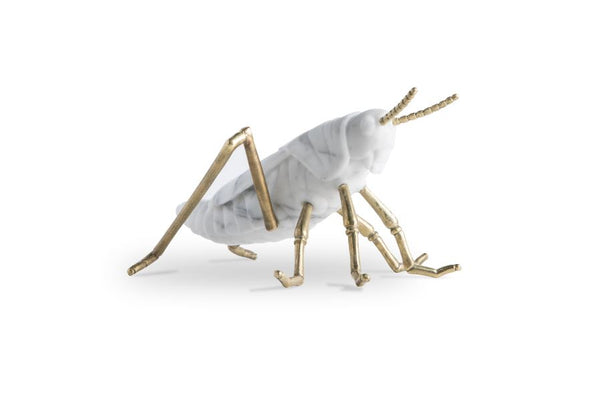 X_Locusta Migratoria - grasshopper in white arabescato marble Made in Italy