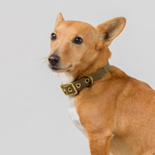Animals In Charge All Weather Collar -  Olive