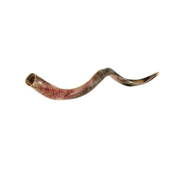 Yemenite Shofar Judaica Vision for Israel USA
