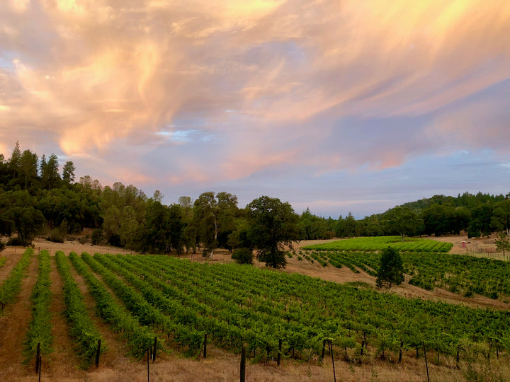 Our Sierra Foothills Vineyard
