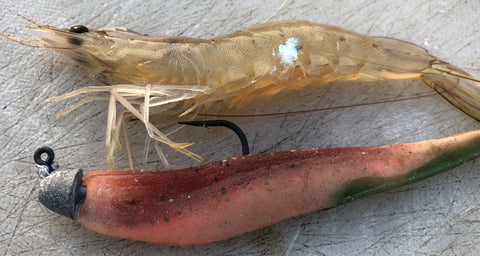 Match the Hatch? The RHino Lure is not the correct colour to imitate the live prawn pictured.
