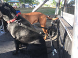 Purple TraySafe T Double Trouble - Ute tray safety restraint- Secure both your dogs to the Ute Tray - Skulldrag Industries
