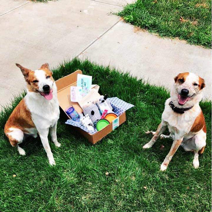 Subscription - 2 Dog Box