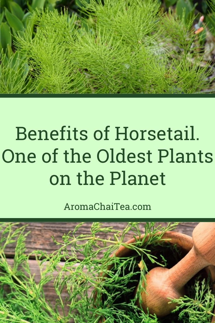 Health Benefits of Horsetail, One of the Oldest Plants on the Planet
