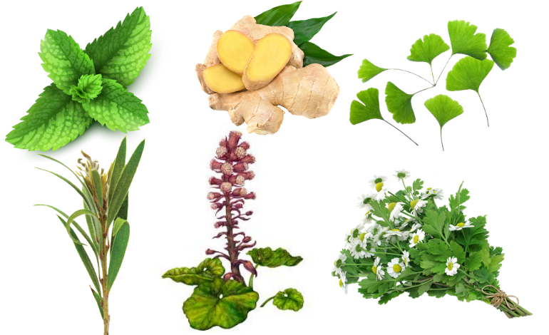 Common Natural Herbal Remedies for Migraines: What you Need to Know.