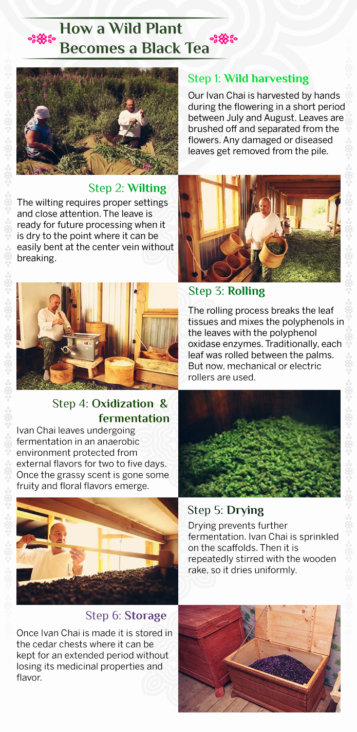 Aroma ChaiTea How Our Tea is Made
