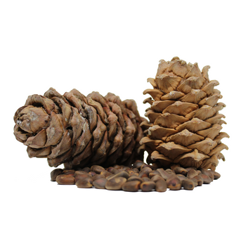 Aroma ChaiTea Siberian Cedar Cone with Nuts