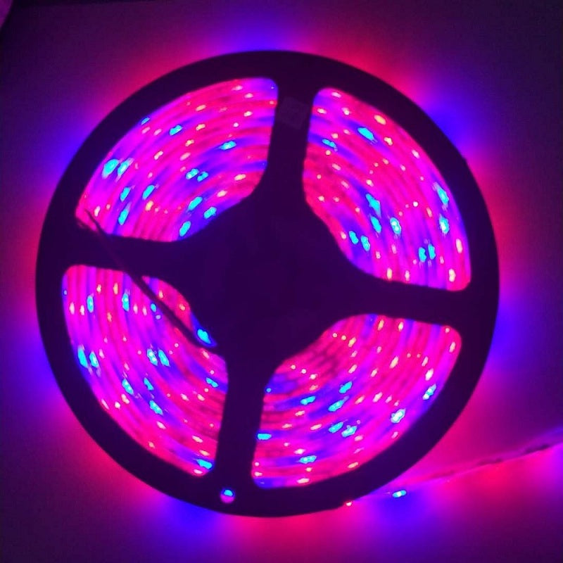5 M LED Waterproof Full Spectrum Strip Light 300 LEDs 5050 Chip Fitolampy Grow Lights For Greenh...MULTI / 3RED 1BLUE