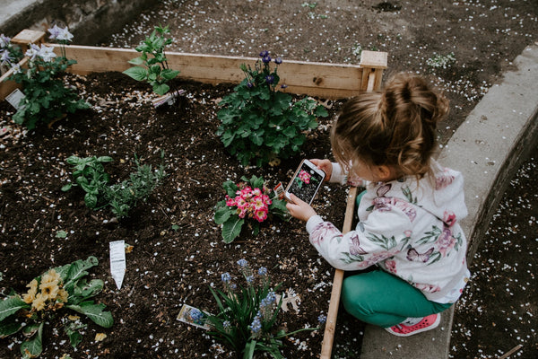 Little girl taking a photo of a flower in their home garden