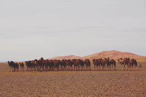 SAND, SPICES + MERCHANTS: MOROCCO (11/15 Days)