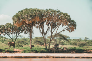 CHANGE MAKERS, BEACHES + THE WILD: KENYA  (11 days)