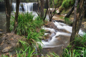 Nellies Glen, Southern Highlands, NSW (AB031R)