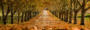 Autumn Driveway, Southern Highlands, NSW