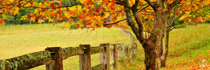 Autumn Fence, Southern Highlands, NSW (AB004WP)