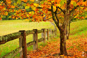 Autumn Fence, Southern Highlands, NSW (AB005R)
