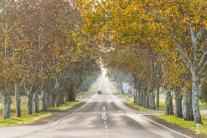 Autumn Streetscape, Narrandera