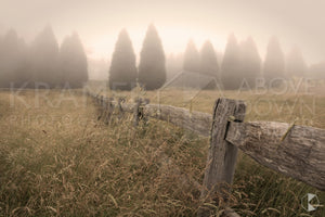 Conifer Fence, Southern Highlands, NSW (AB022R)