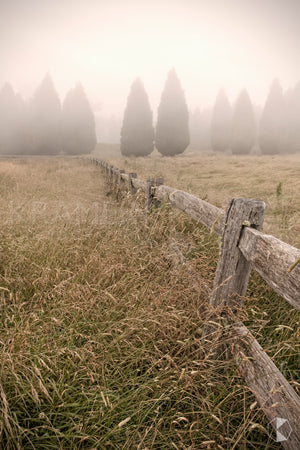 Conifer Fence, Southern Highlands, NSW (AB023VR)