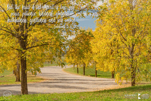 Word + Image: Galatians 5:22-23 - Southern Highlands (WI032R)