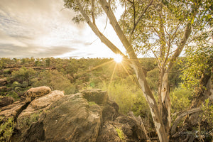 Gundabooka National Park, Bourke, Outback NSW (BO014R)