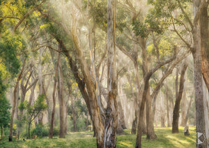 Kangaloon Trees, Southern Highlands