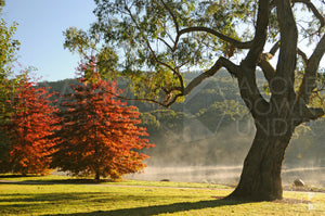 Lake Alexandra, Southern Highlands, NSW