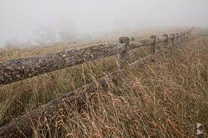 Misty Fence, Southern Highlands, NSW (AB024R)